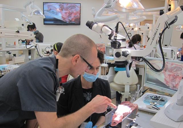 periodontal-anatomy-autograft-harvest