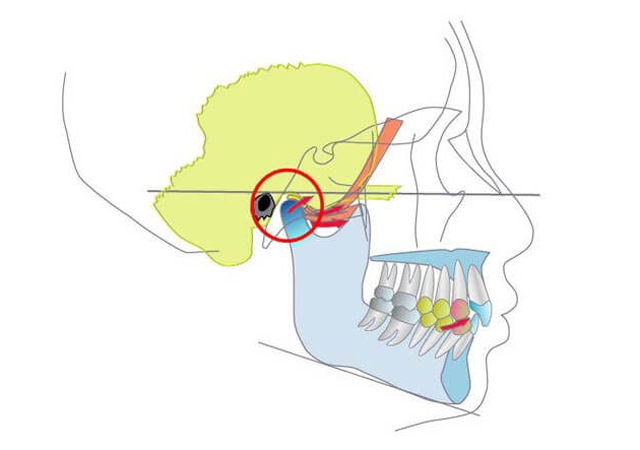 interdisciplinary-dental-education