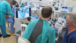 endodontics course bay area